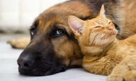 Covid-19 e animali domestici