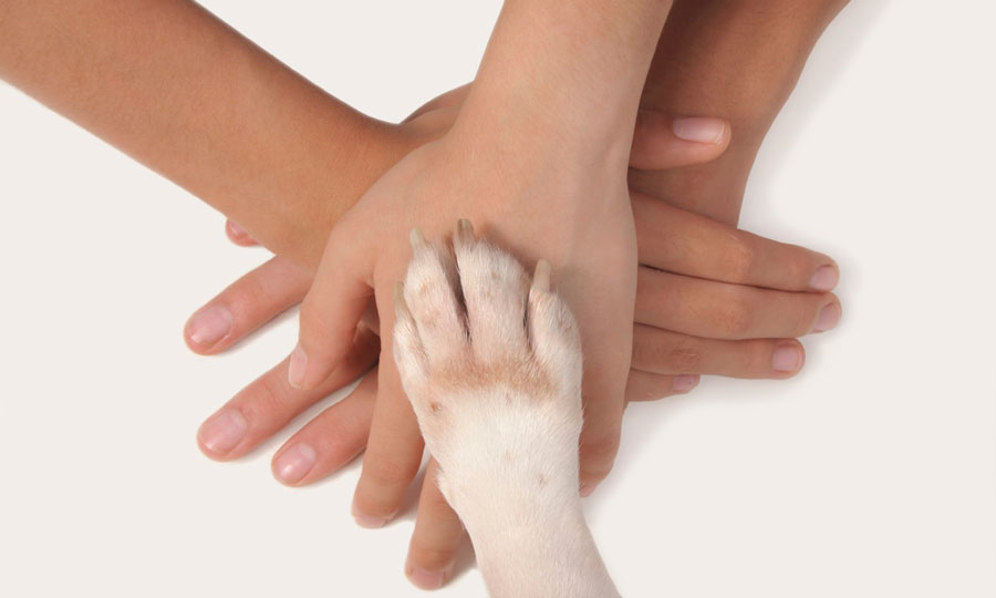 Pet therapy: terapia che aiuta anche i bambini e gli autistici
