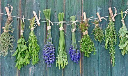 Allattamento e piante officinali