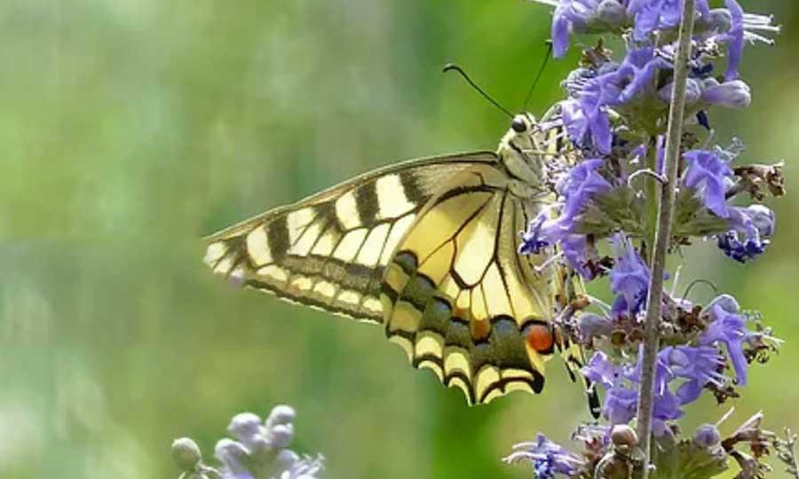Kit SmartBugs: allevamento farfalle, bachi da seta e tanto altro